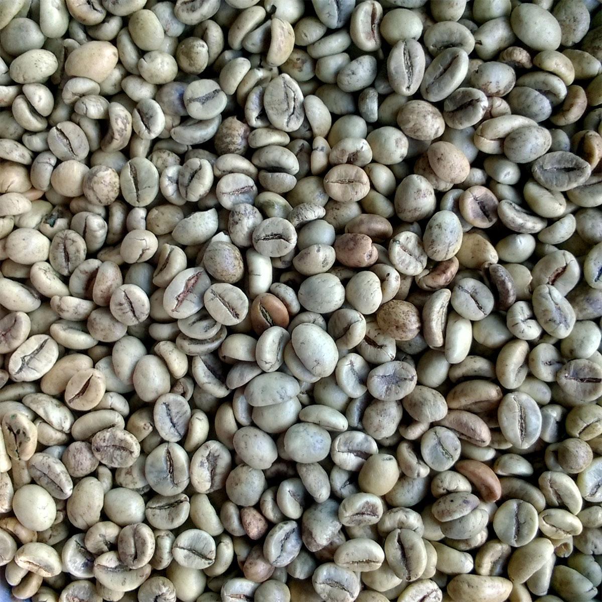 cà phê nguyên chất robusta Light Coffee