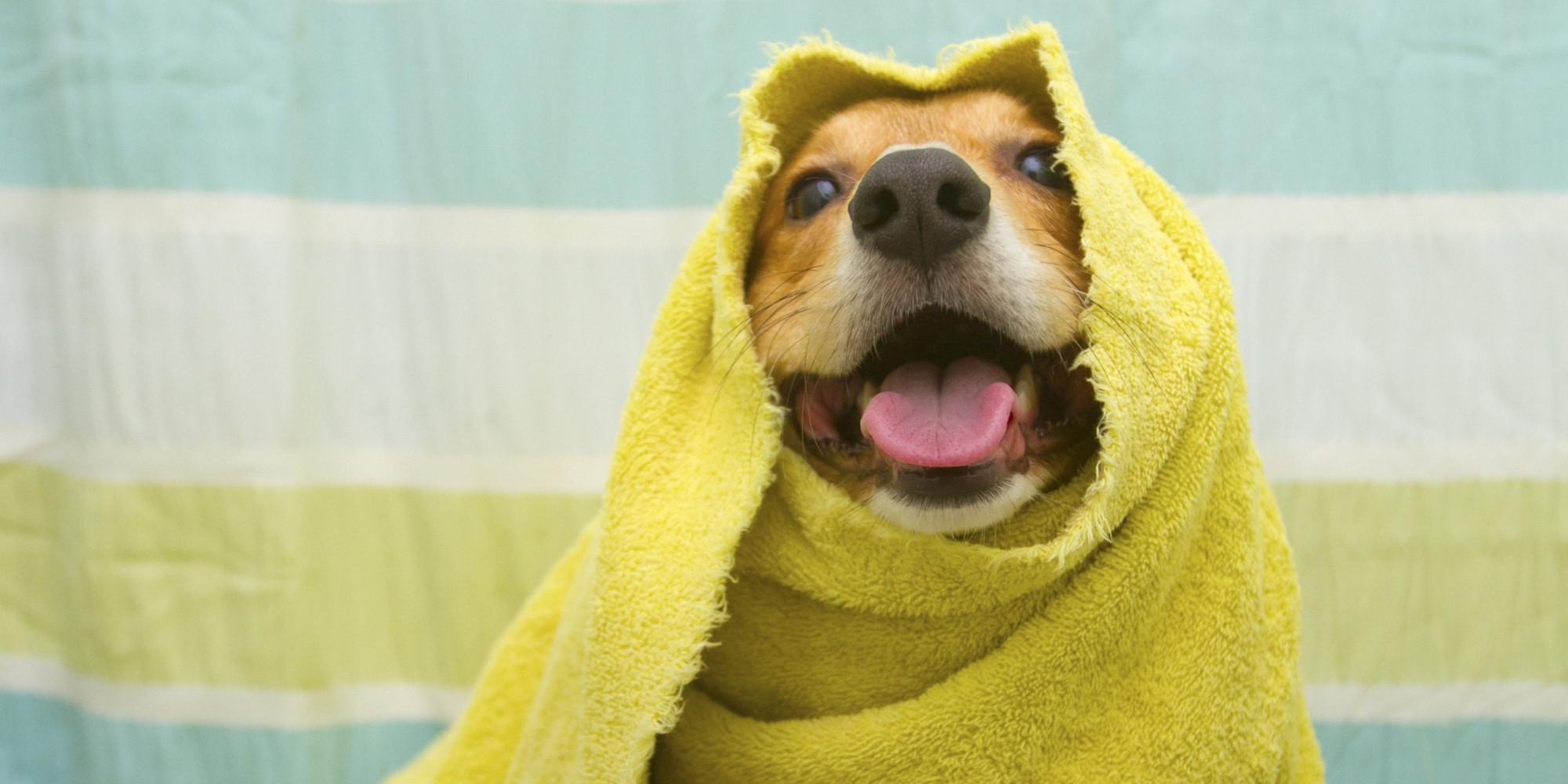 o-DOG-SHOWER-facebook.jpg