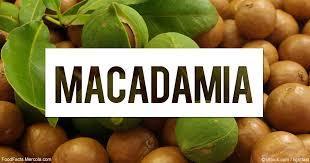 macadamia fd.jfif
