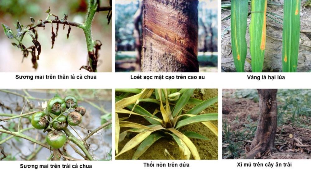 bệnh cây trồng