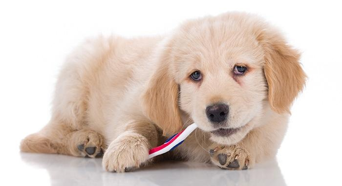 dental-care-for-dogs.jpg