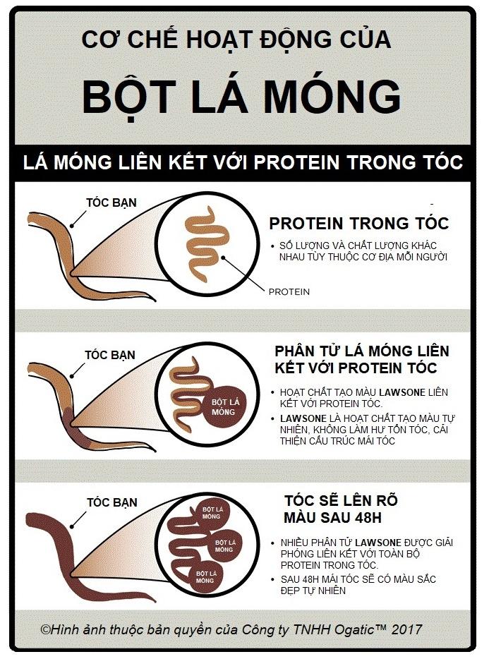 Co che hoat dong Bot la Mong Ogatic