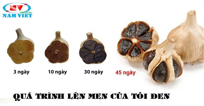 Quá trình lên men Tỏi đen Việt Nam